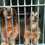 photo of Turner and Paisley at the shelter